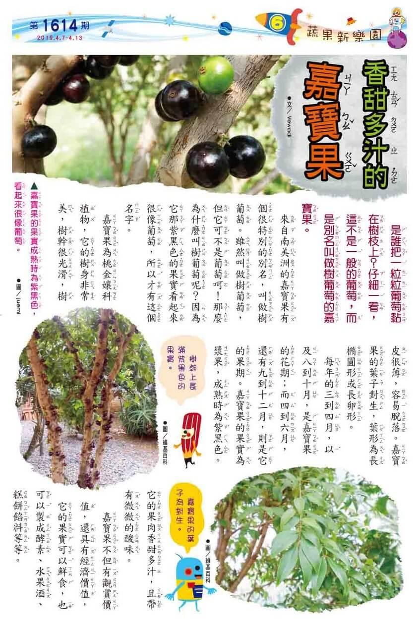 06 蔬果新樂園 香甜多汁的嘉寶果