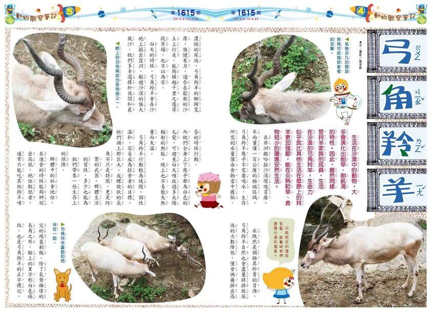 04-05 動物觀察筆記 弓角羚羊