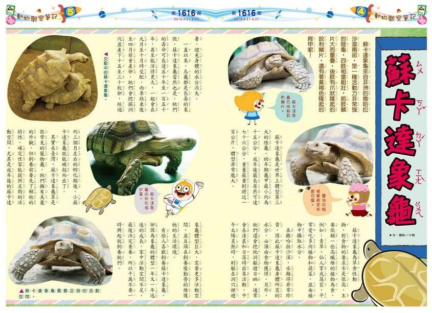 04-05 動物觀察筆記 蘇卡達象龜