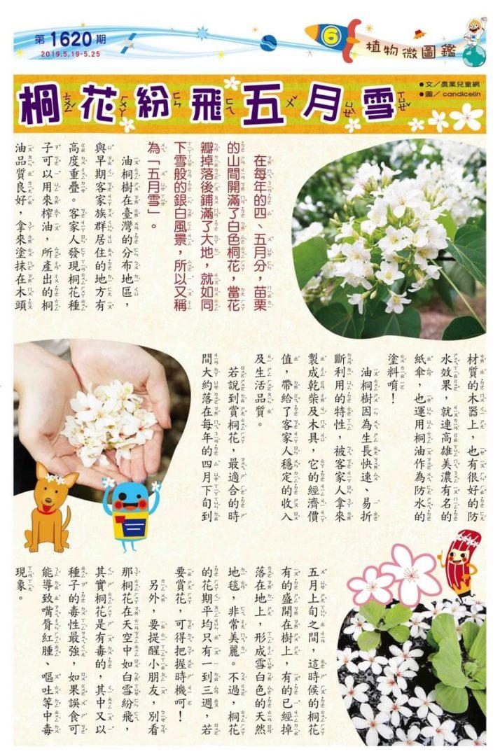 06 植物微圖鑑 桐花紛飛五月雪