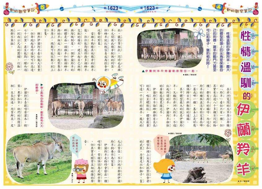 04-05 動物觀察筆記 性情溫馴的伊蘭羚羊