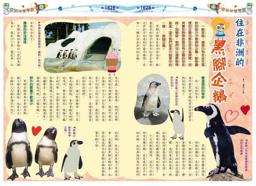 04-05 飛羽快樂學園 住在非洲的黑腳企鵝