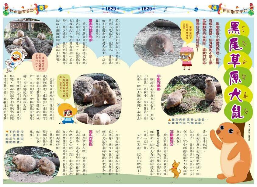04-05 動物觀察筆記 黑尾草原犬鼠