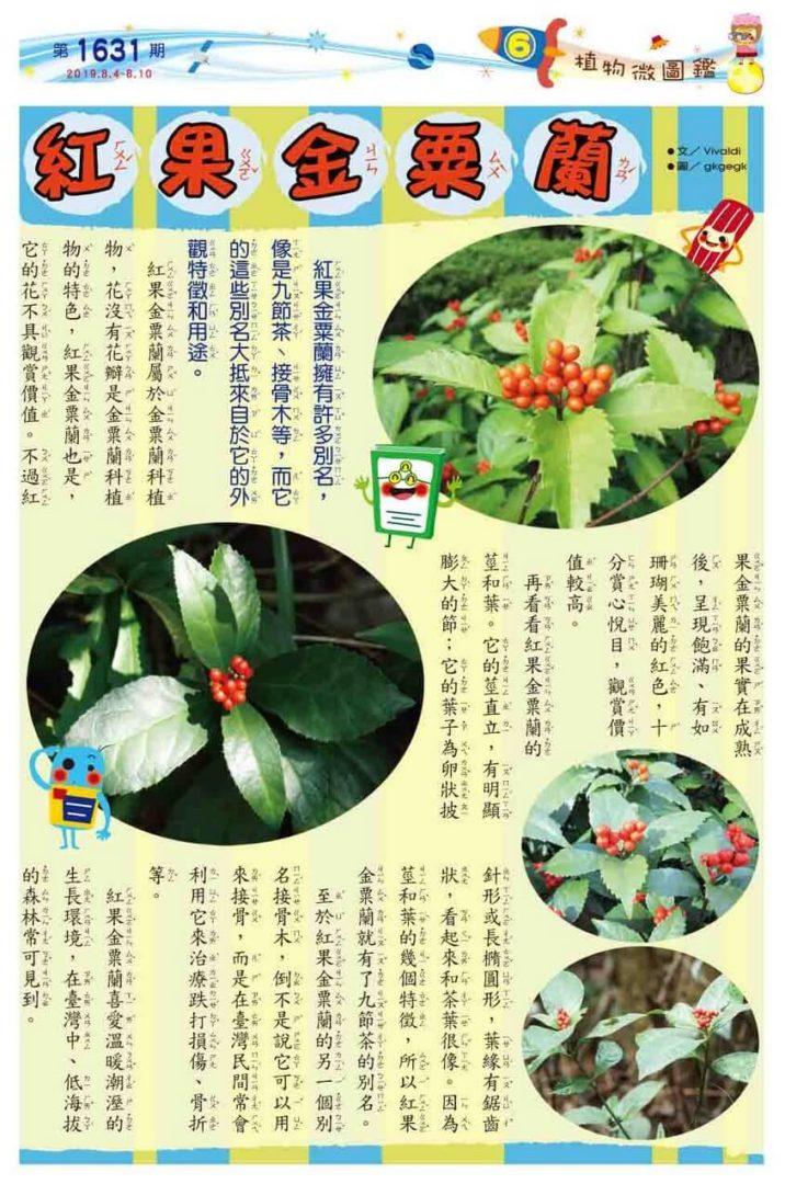 06 植物微圖鑑 紅果金粟蘭