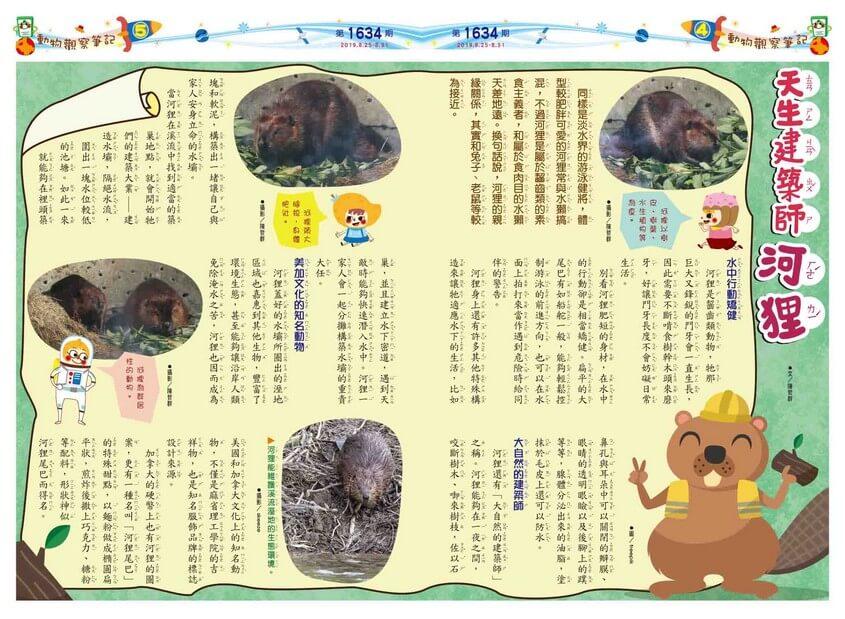 04-05 動物觀察筆記 天生建築師 河狸