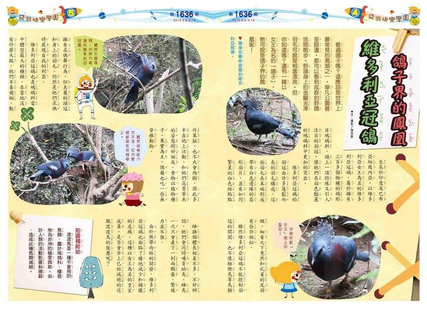 04-05 飛羽快樂學園 鴿子界的鳳凰 維多利亞冠鴿