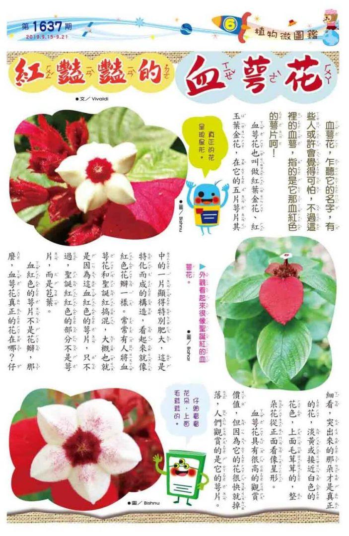 06 植物微圖鑑 紅豔豔的血萼花