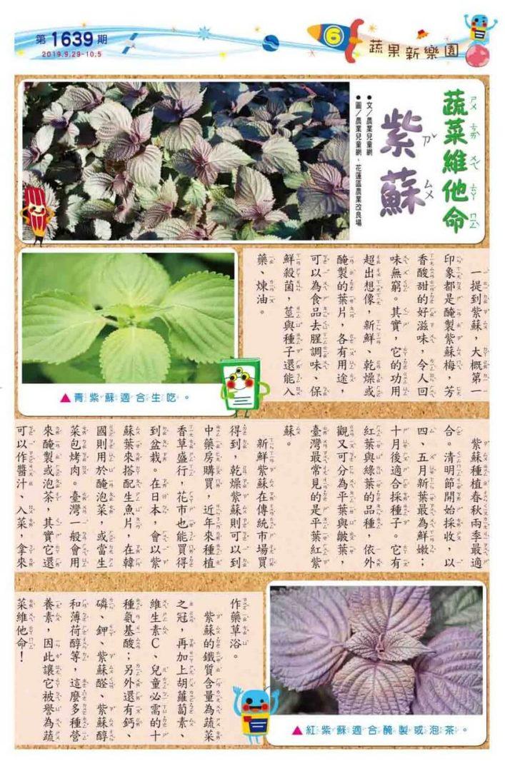 06 蔬果新樂園 蔬菜維他命 紫蘇