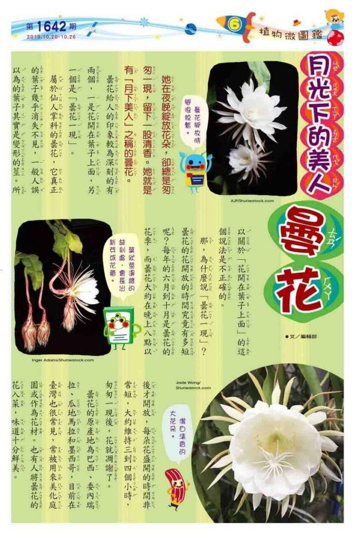 06 植物微圖鑑 月光下的美人 曇花