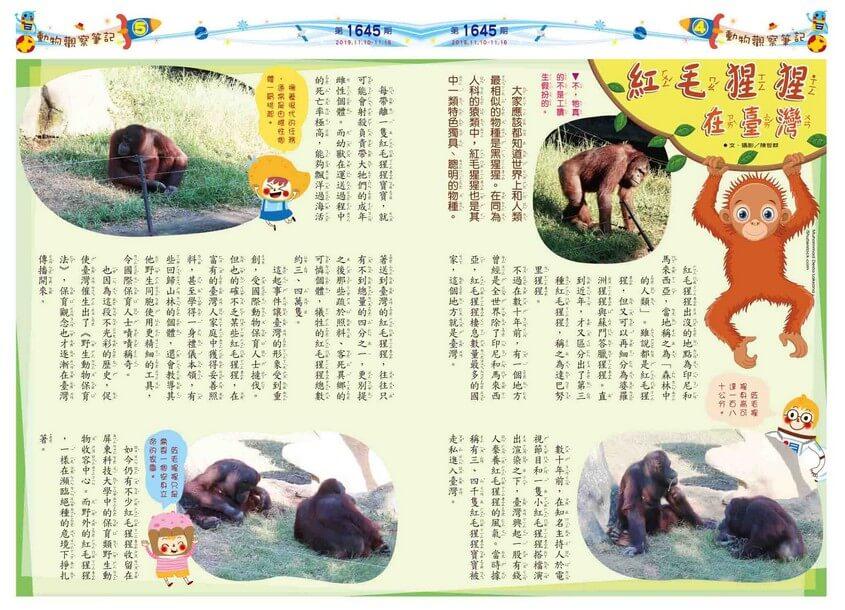 04-05 動物觀察筆記 紅毛猩猩在臺灣
