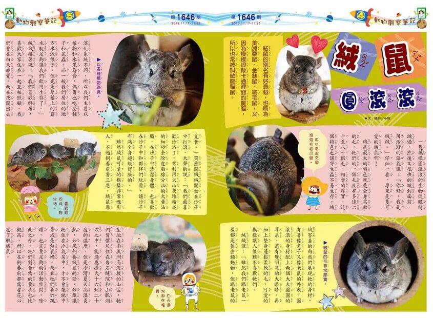 04-05 動物觀察筆記 絨鼠圓滾滾