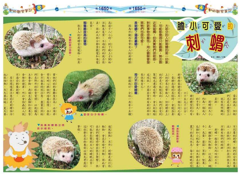 04-05 動物觀察筆記 膽小可愛的刺蝟