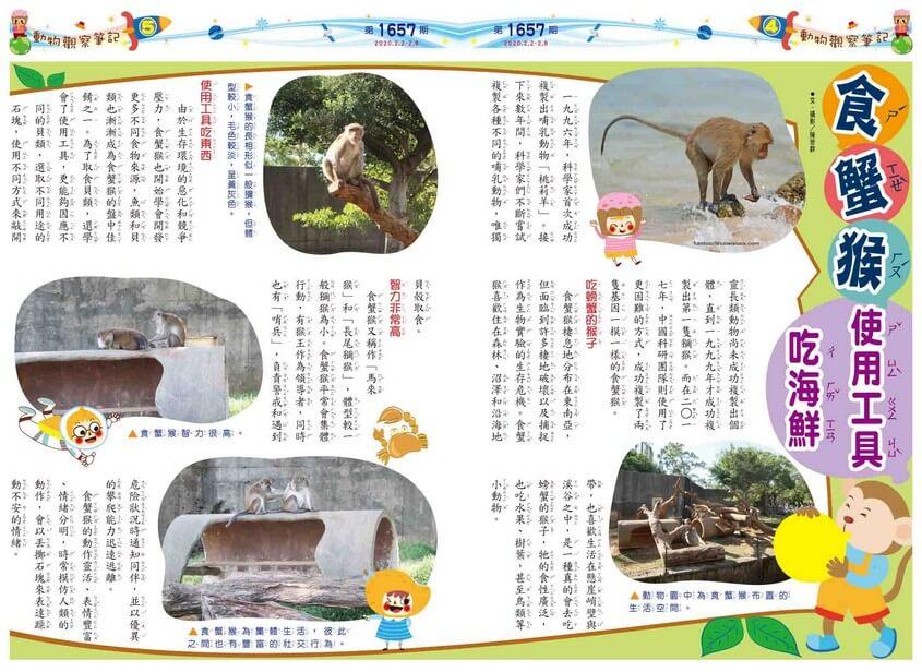 04-05 動物觀察筆記 食蟹猴 使用工具吃海鮮