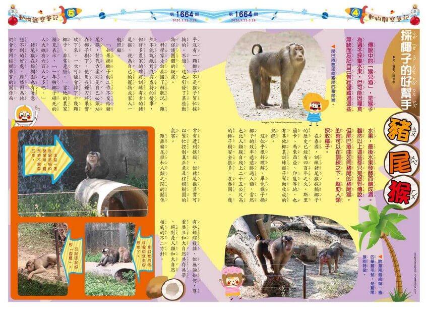 04-05 動物觀察筆記 採椰子的好幫手 豬尾猴
